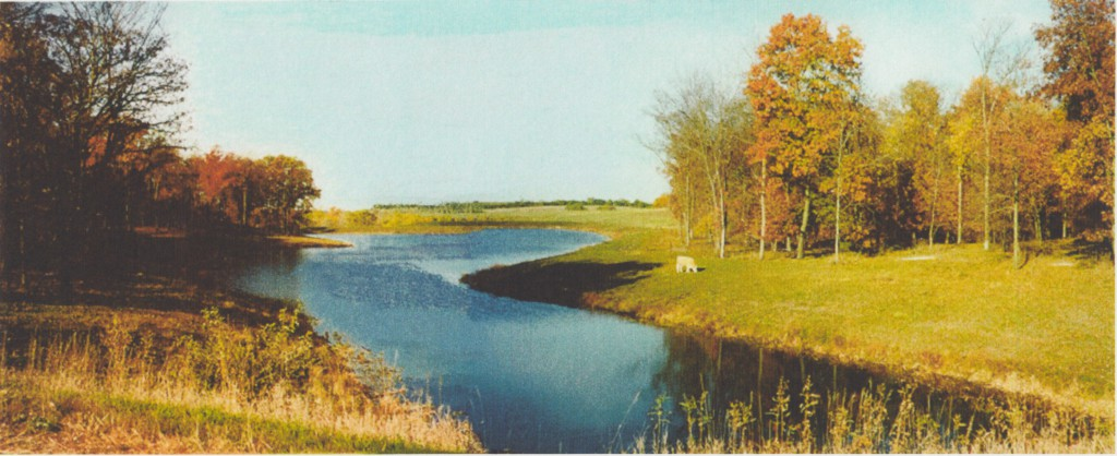 A pasture with timber, river and cow.